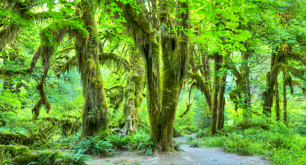 Forest Bathing: The Healing Power of Green