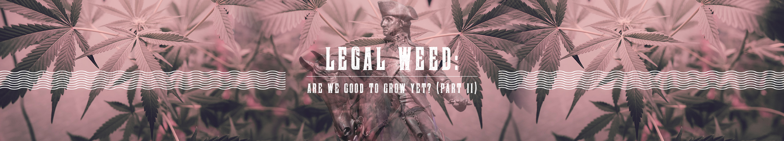 Legal Weed: Are We Good To Grow Yet? (Part II)