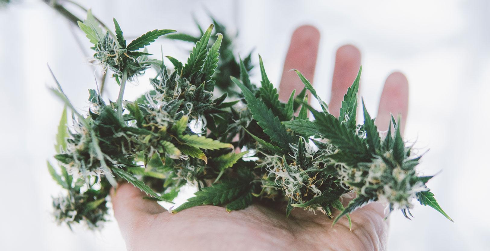 Julie Dubocq of Shango Premium Cannabis