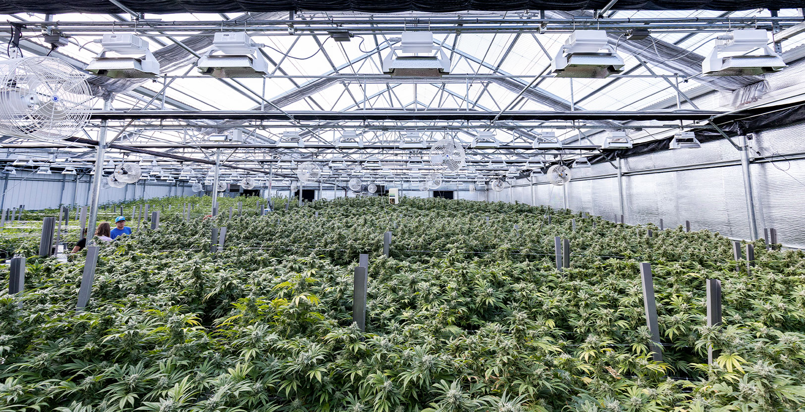 Capital Cannabis Farm - Willamette Valley, OR